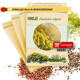 HINOJO SILVESTRE Foeniculum vulgare semillas x 10 g