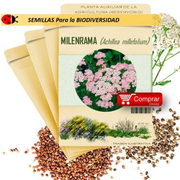 MILENRAMA Achillea millefolium semillas x 10 g