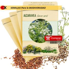 ALCARAVEA Carum carvi semillas x 10 g