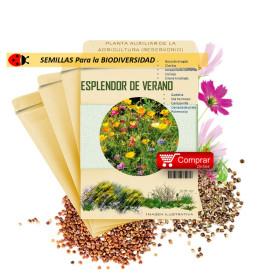 ESPLENDOR DEL VERANO semillas x 5 g