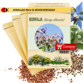BORRAJA Borago officinalis semillas x 5 g