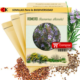 ROMERO Rosmarinus officinalis semillas x 1 g