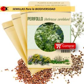 PERIFOLLO Anthriscus cerefolium semillas x ,5 g