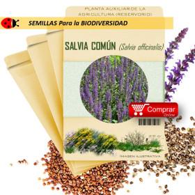 SALVIA Salvia officinalis semillas x 2,5 g
