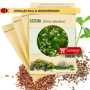 ESTEVIA Stevia Rebaudiana x 50 semillas