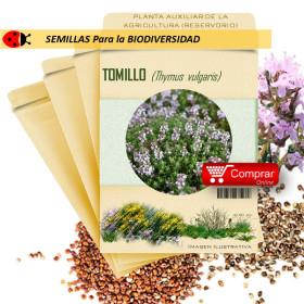TOMILLO Thymus vulgaris semillas x 1 g