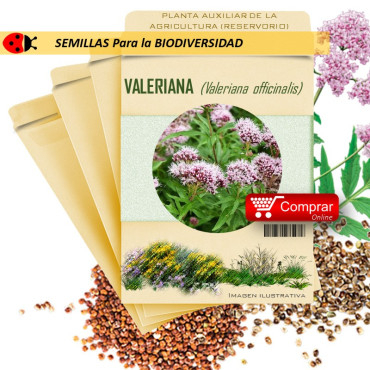 VALERIANA V. officinalis semillas x 2,5 g