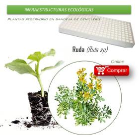 RUDA bandeja de semillero X70 Ud