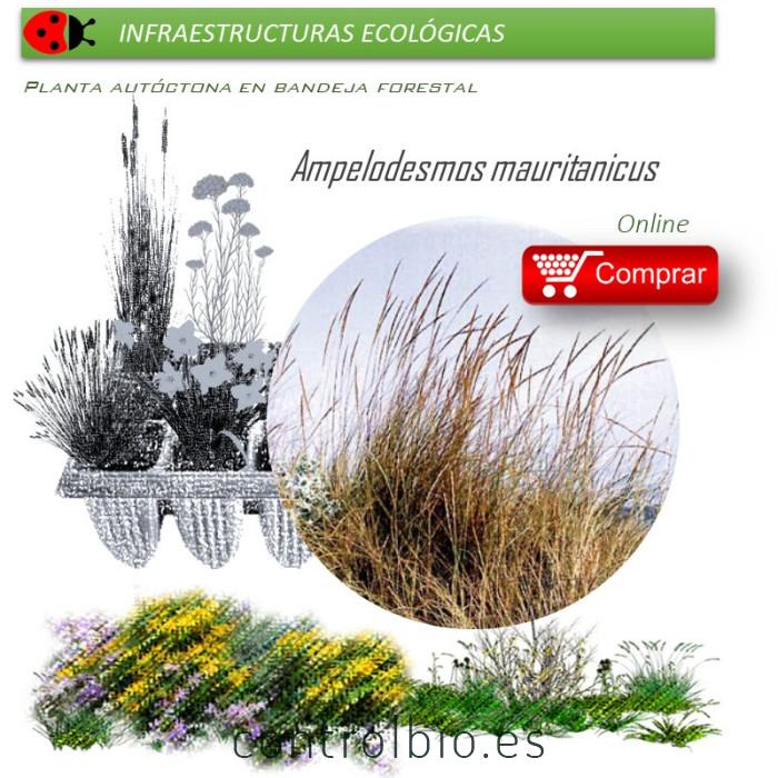 planta autóctona en bandeja forestal