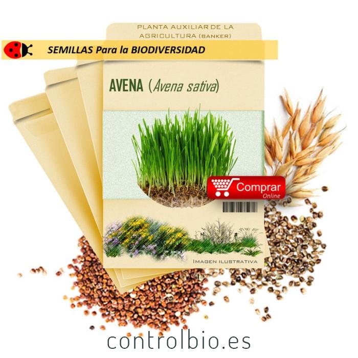 AVENA (A. sativa) semillas 500 g