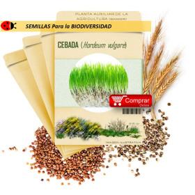 CEBADA (Hordeum vulgare) semillas 1.000 g