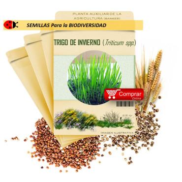 TRIGO DE INVIERNO (Triticum spp) semillas 1.000 gr