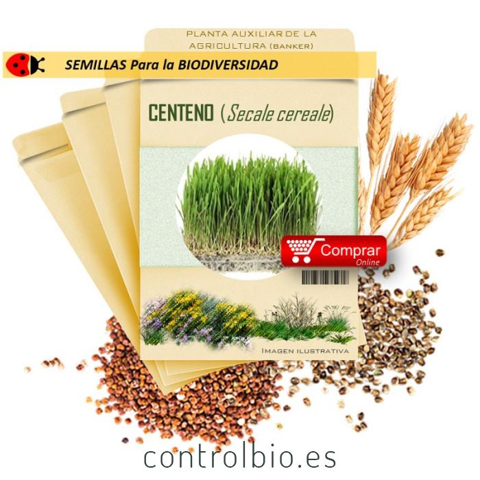 CENTENO (Secale cereale) semillas 1.000 g