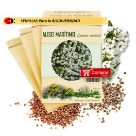 LOBULARIA MARITIMA semilla x 10 g