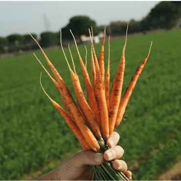 NEMGUARD SC 1L nematicida natural autorizado para agricultura ecológi