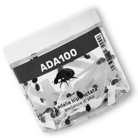ADALIA 100 adultos de Adalia bipunctata