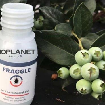 FRAGGLE 750 mix de parasitoides de pulgón
