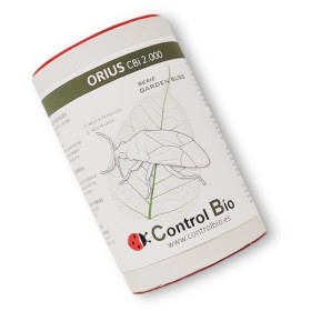 ORIUS CBi 2000-N ninfas de Orius laevigatus depredador de trips