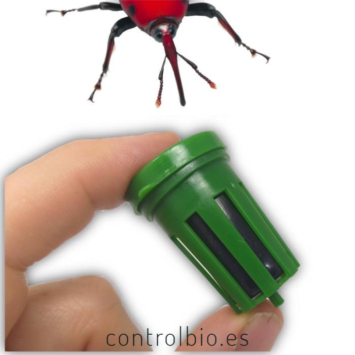 PHEROSAN RHYNCHOPHORUS feromona picudo rojo 150 días