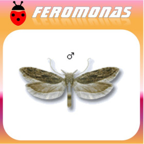 Feromonas PRAYS OLEAE (polilla del olivo) 40 días