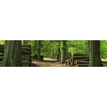 Trampas forestales