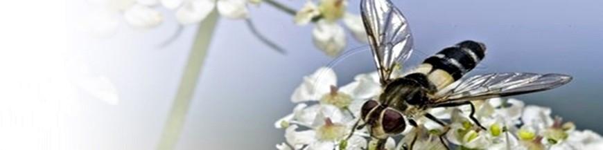 Reservorios S1 (aromáticas y condimentarias)
