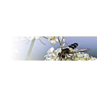 Plantas insectarias