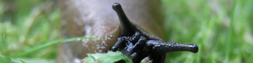 DE SUELO (babosas y caracoles)
