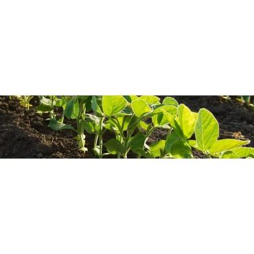 Fungicidas ecológicos