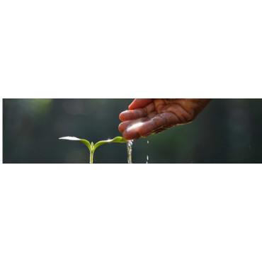 Bioestimulantes ecológicos
