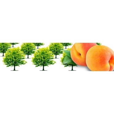 Frutales hueso