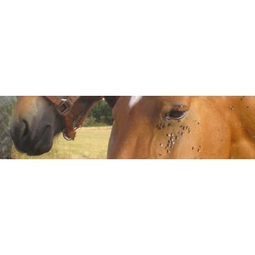 Moscas en establos (Musca, Stomoxys, ...)