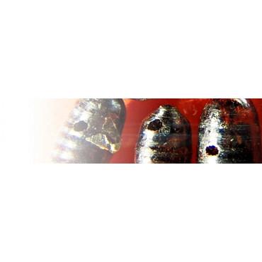 Muscidifurax raptorellus