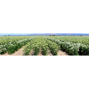 Agricultura biodinámica