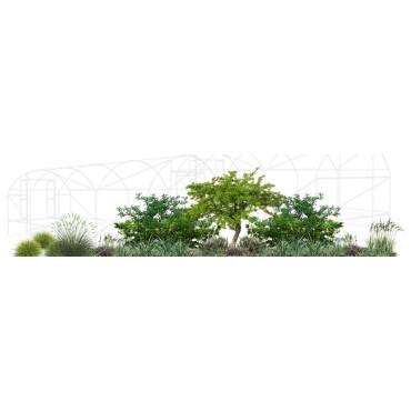 Setos perimetrales (vivero agro forestal)