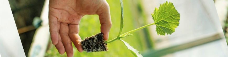 Reservorios C1 bandeja de semillero