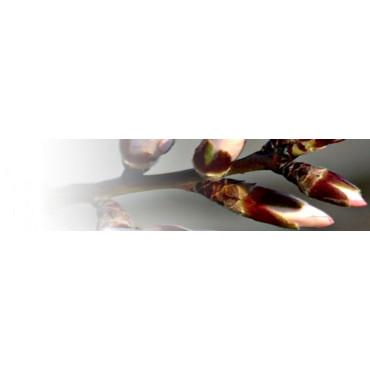 Fitorreguladores (cuaje / engorde)