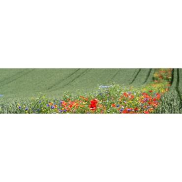 Reservorios II (florales)