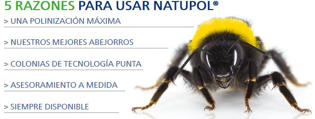 comprar colmena abejorros natupol koppert