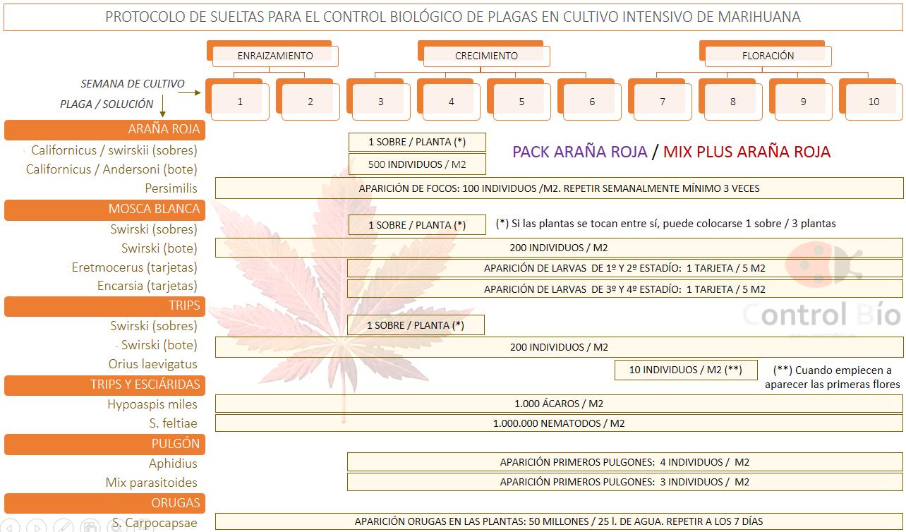 Protocolo de sueltas para la lucha biológica en marihuana