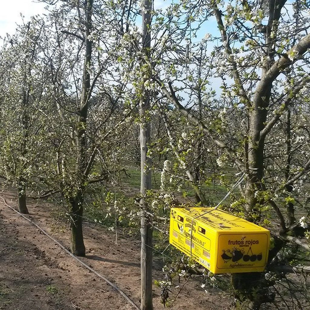 comprar colmena de abejorros para frutales