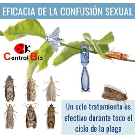 confusion sexual de plagas agricolas