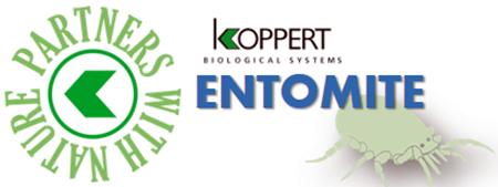 koppert entomite scymitus hypoaspis