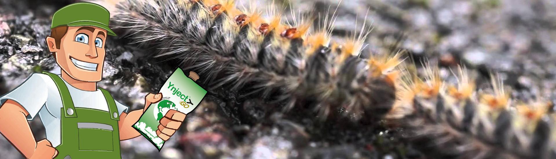 Endoterpia arbórea sistema fertinyect
